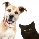 Animali e Accessori