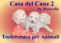 Toilettatura per Animali a Messina