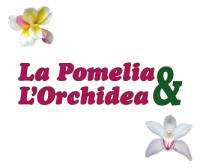 Pomelia e Orchidea Giardinaggio a Messina