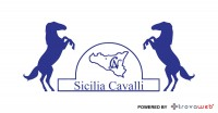 Vendita e Addestramento Cavalli Sicilia - Italia
